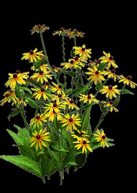 Flora, Flower Bush, Yellow Flower, Black Eyed Susans
