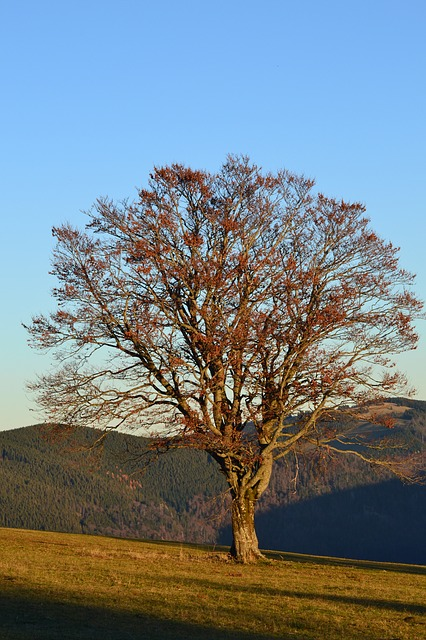 Black Forest, Freiburg, Schauinsland, Tree, Autumn
