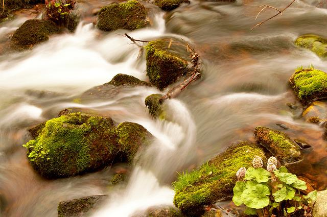 Bach, Black Forest, Forest, Nature, Water