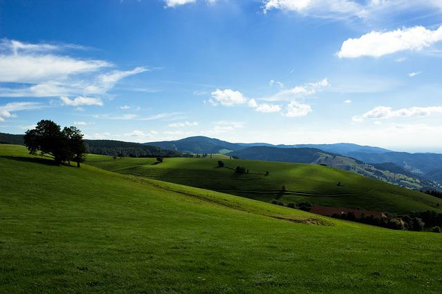 Black Forest, Forest, Landscape, Germany, Trees, Meadow