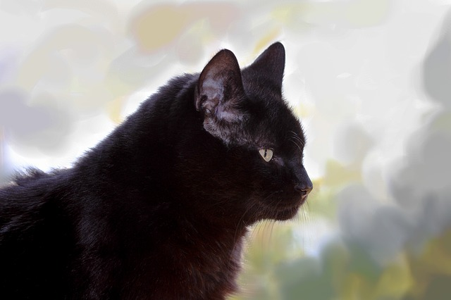 Cat, Black, Beautiful, Pride, Noble, Sitting, Profile