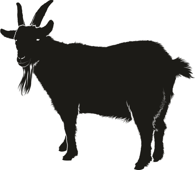 Goat, Black, Animal, Silhouette, Shadow