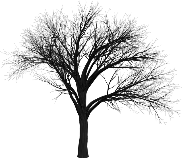 Tree, Branch, Empty, Isolated, Black, Spooky, Halloween