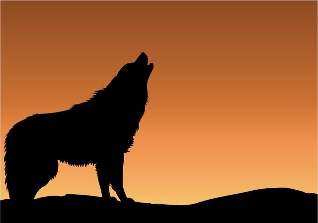 Wolf, Howling, Sunset, Sunrise, Silhouette, Black