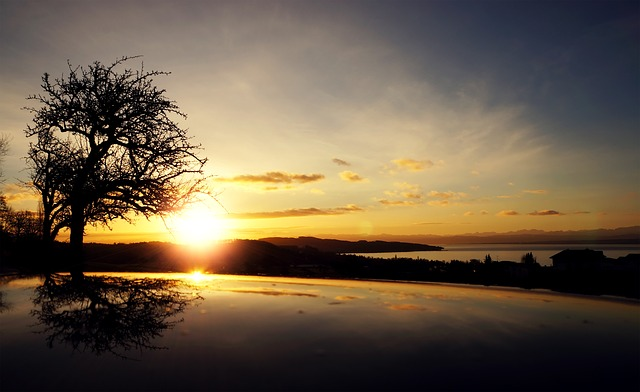 Sunrise, Tree, Black, Silhouette, Reflection, Yellow