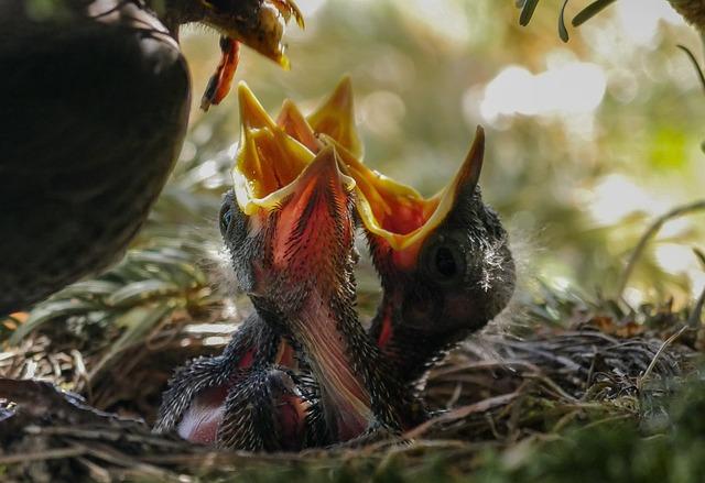Bird, Nest, Feed, Nature, Animal, Blackbird, Hatching