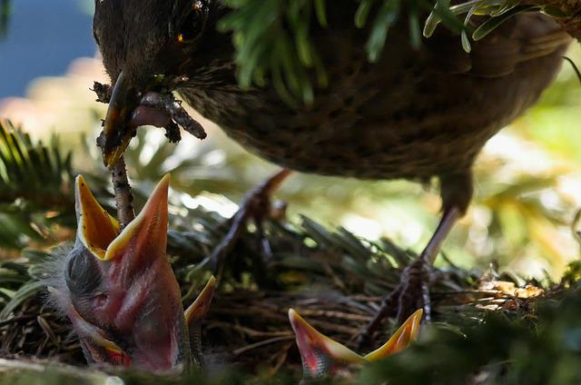 Bird, Nature, Animal, Blackbird, Nest, Feed, Worm