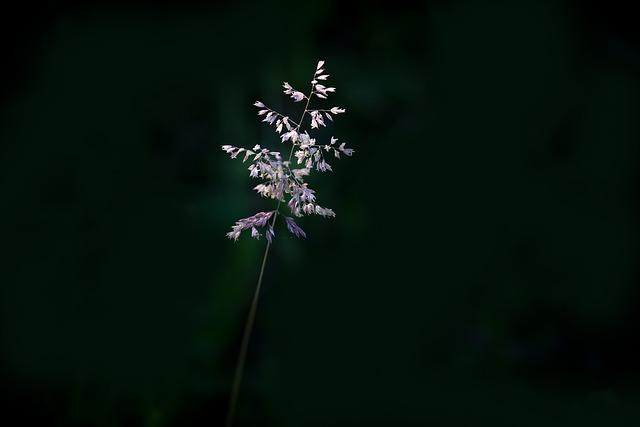 Blade Of Grass, Grasses, Seeds, Nature, Plant