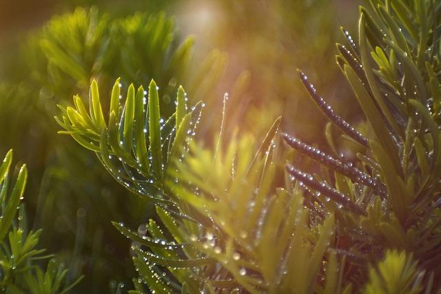 Yew, Bush, Blades, Dew, Green