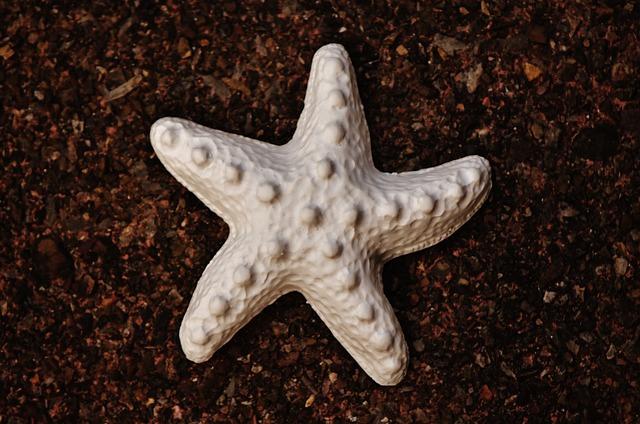 Starfish, Gypsum, Blank, Unpainted, White