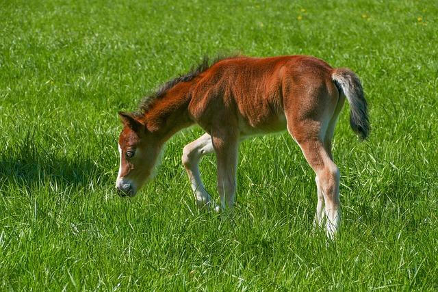 Colt, Pony, Brown, White Boots, Blaze White, Grass
