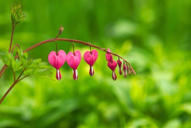 Nature, Leaf, Plant, Garden, Flower, Bleeding Heart
