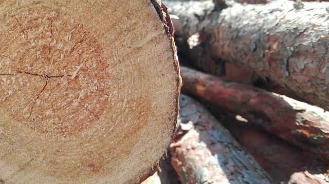 Blockhouse, Wood, Felling, Logging