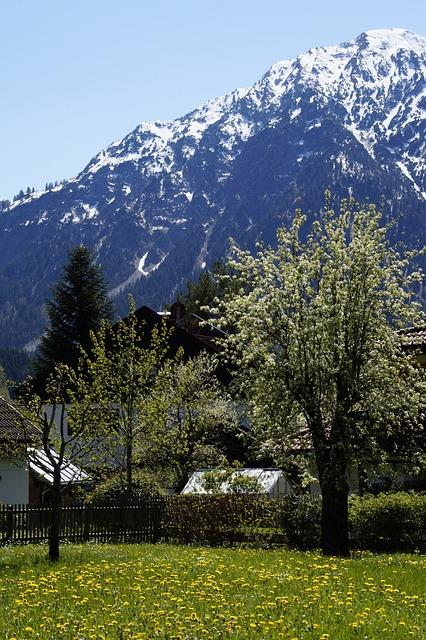 Alpine, Allgäu, Spring, Blossom, Bloom, Blossom