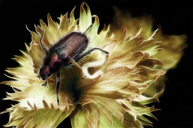Fractalius, Garden Leaf Beetle, Aphid, Blossom, Bloom