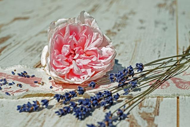 Rose, Flower, Blossom, Bloom, Bloom, Pink, Pink Rose