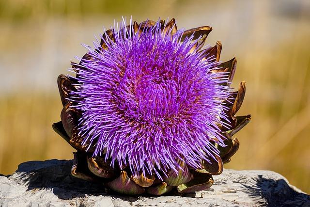 Artichoke, Bloom, Blossom, Bloom, Bright, Purple