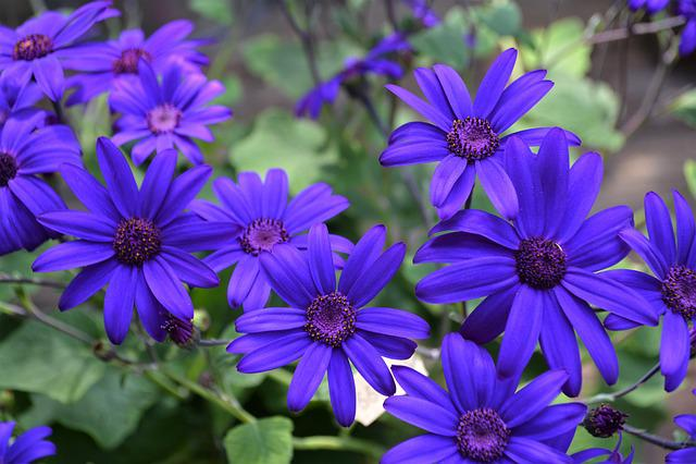 Blue, Purple, Blossom, Bloom, Flower, Nature, Summer