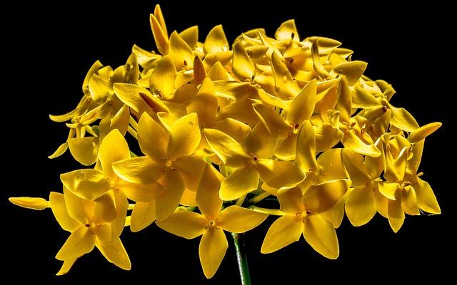 Blossom, Bloom, Flower, Yellow, Close
