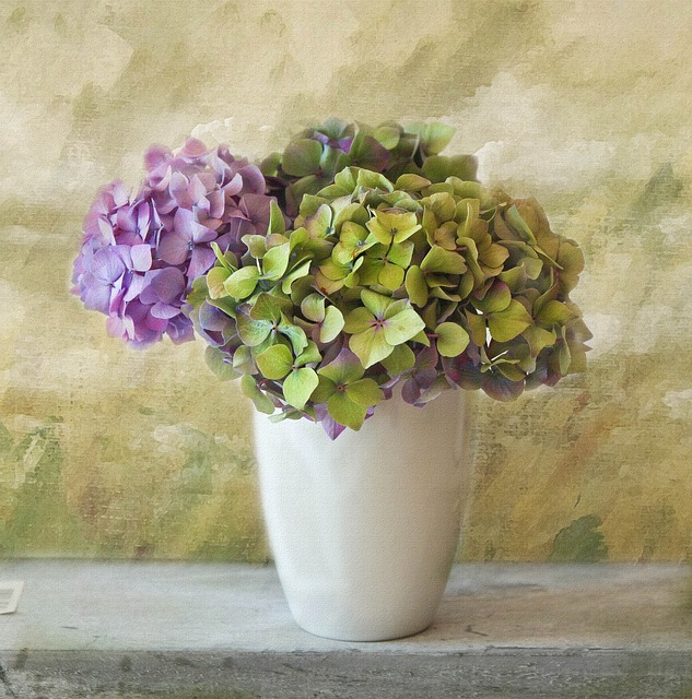 Hydrangea, Flower, Blossom, Bloom, Hydrangea Plants