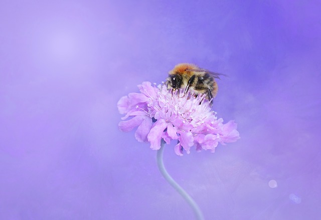 Bee, Hummel, Insect, Blossom, Bloom, Flower, Nature