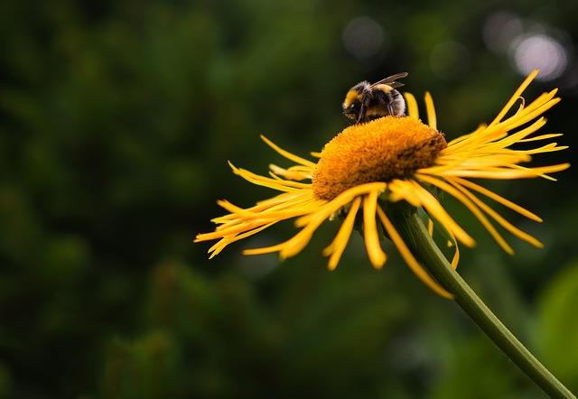 Macro, Hummel, Blossom, Bloom, Close, Nature, Flower