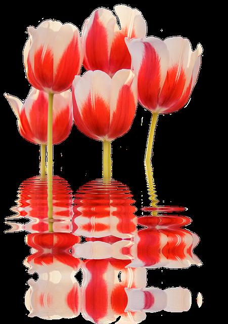 Spring, Tulips, Mirroring, Flower, Blossom, Bloom