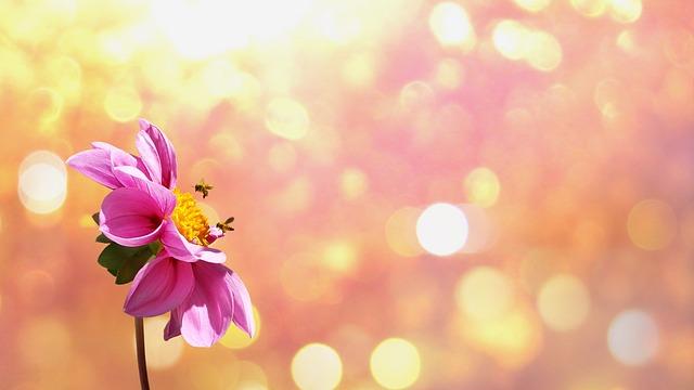 Flower, Blossom, Bloom, Orange, Plant, Nature
