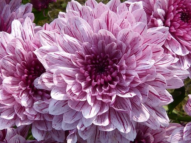 Macro, Close, Blossom, Bloom, Nature, Flower, Plant