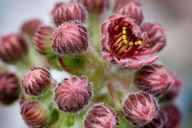 Cactus, Bloom, Plant, Blossom, Bloom, Prickly, Flora