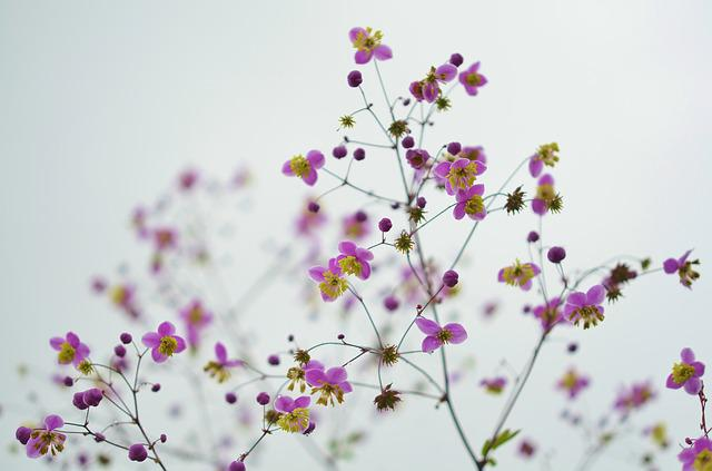 Flowers, Purple Flowers, Bloom, Blossom, Branches