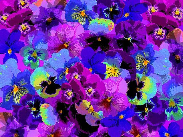 Pansy, Spring, Garden, Blossom, Bloom, Flower, Blue