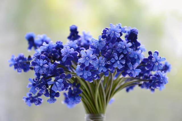 Flowers, Bouquet, Blue, Muscari, Bloom, Colorful