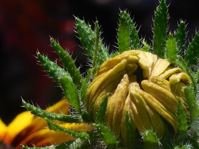 Flower, Bud, Nature, Blossom, Bloom, Plant, Spring