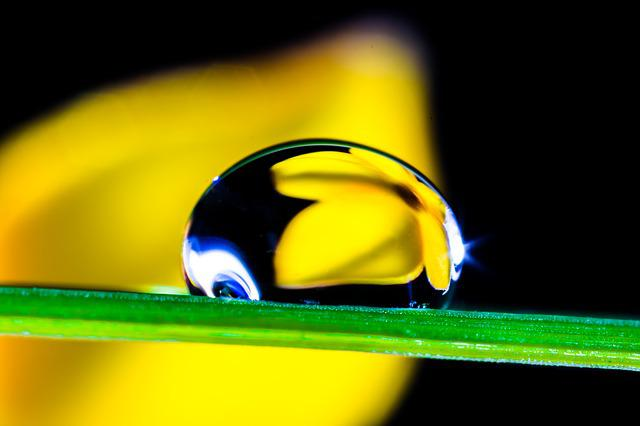 Drop Of Water, Drip, Blade Of Grass, Blossom, Bloom