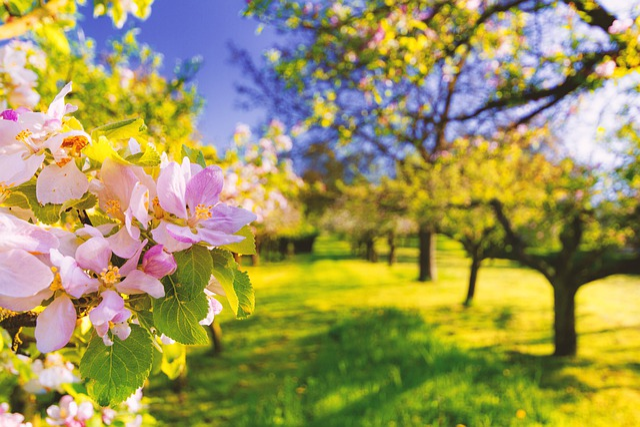 Flower, Spring, Bloom, Nature, Plant, Pink, Blossom