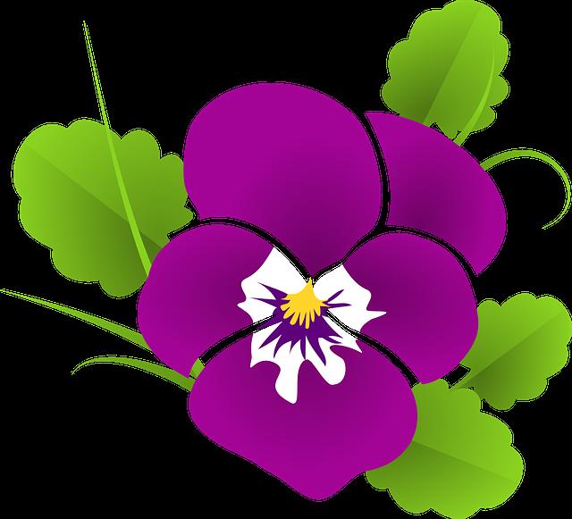 Pansy, Violet, Viola, Violaceae, Blossom, Bloom, Flower