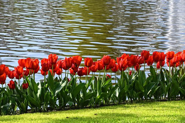 Tulip, Red Tulip, Flower, Plant, Bulbous, Bloom