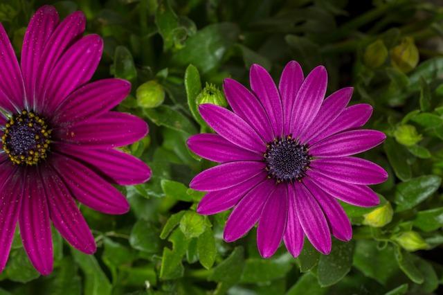 Blossom, Bloom, Flower, Garden, Purple, Close Up