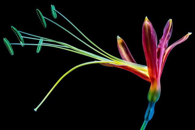Flower, Blossom, Bloom, Colorful, Cool Colors