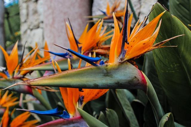 Strelizie, Flower, Blossom, Bloom, Orange, Exotic