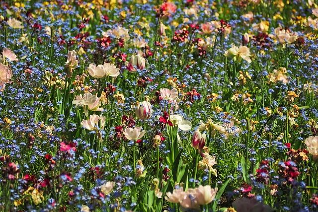 Flowers, Flower Meadow, Nature, Meadow, Bloom