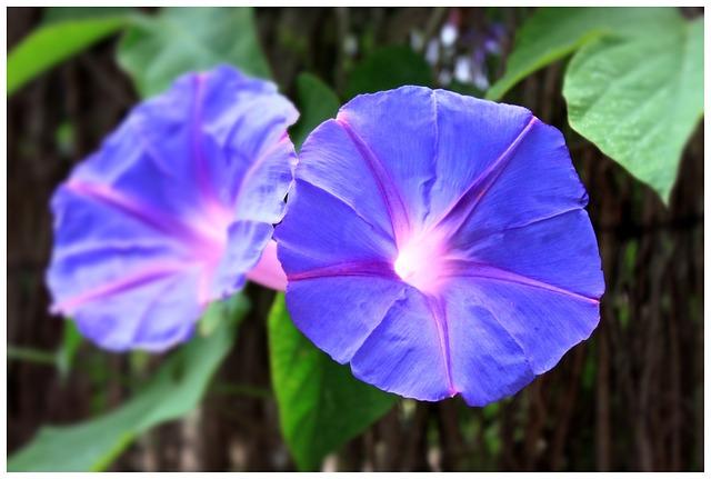 Blossom, Bloom, Flower, Purple, Plant, Purple Flower
