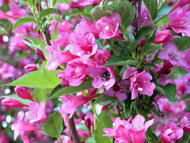 Bloom, Flowers, Bush, Bright