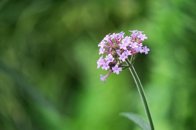 Flower, Plant, Nature, Petal, Bloom, Flower's