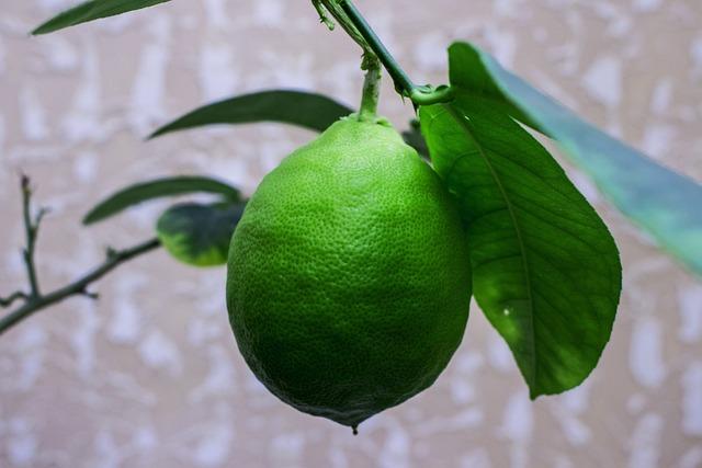 Sheet, Fruit, Food, Nature, Plant, Lemon, Plants, Bloom
