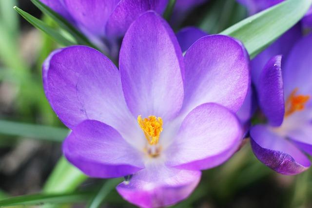 Nature, Spring, Flower, Garden, Plant, Green, Bloom
