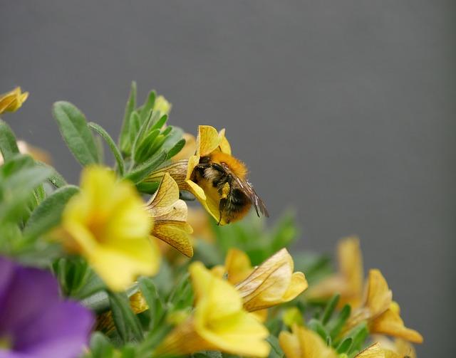 Hummel, Close Up, Blossom, Bloom, Nectar, Work
