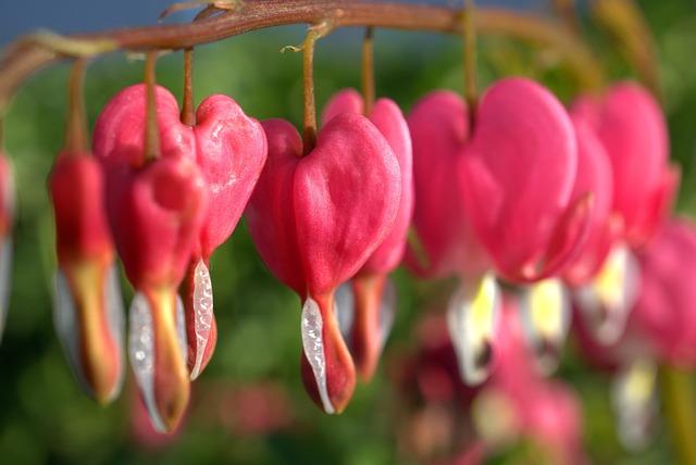 Nature, Flower, Blossom, Bloom, Garden, Plant, Leaf