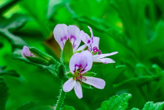 Flower, Days Bamboo Kwai, Light, Bloom, Beautiful